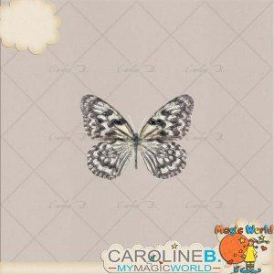 CarolineB_Dulce_Butterfly02 copy
