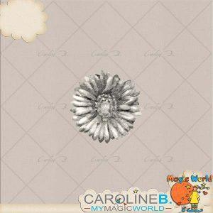 CarolineB_Dulce_Gerbera copy