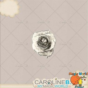 CarolineB_Dulce_Rose copy