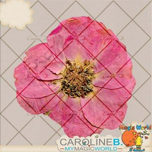 CarolineB_OneSweetDayExtras_PressedFlower_SP