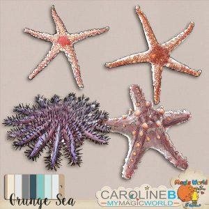 CarolineB_GrungeSeaSeaStars_1