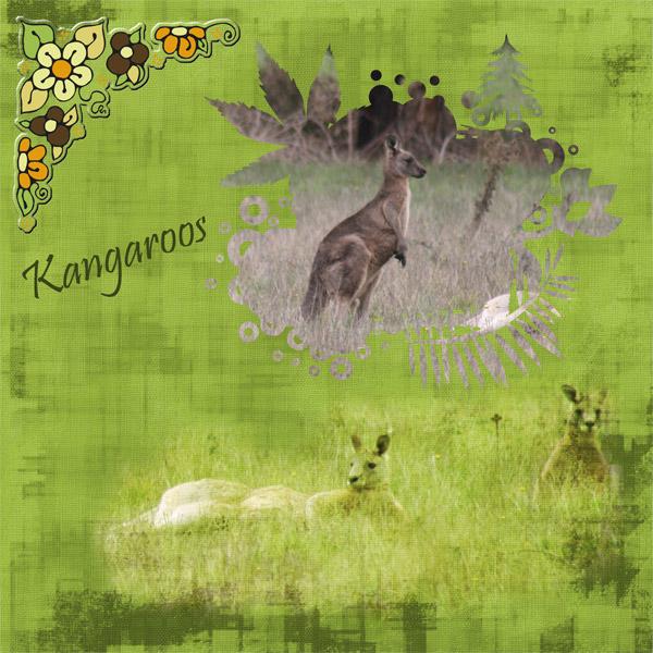 N4D_ANNETTE_kangaroos_