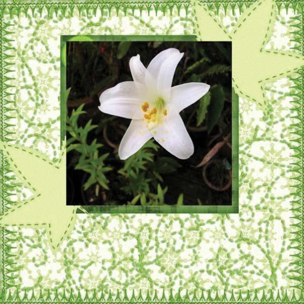 N4D_Annette_Flower_CB